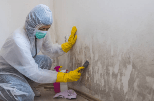 mold-remediation-edmonton