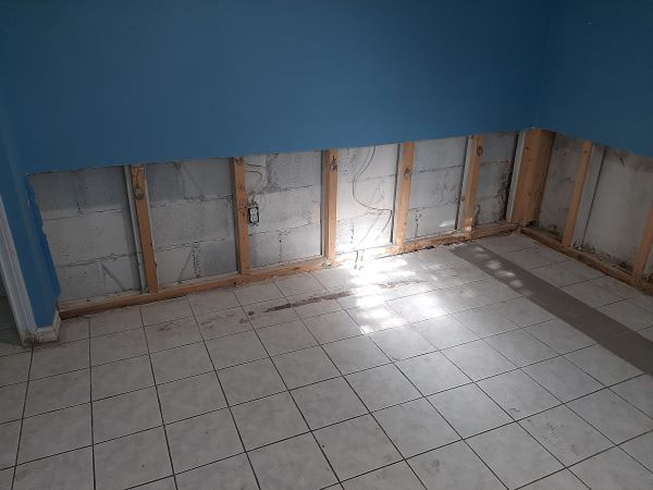 mold removed from edmonton home